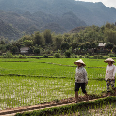 A Glimpse into Vietnamese Life in Mai Chau